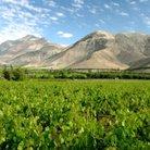 South American Vineyard