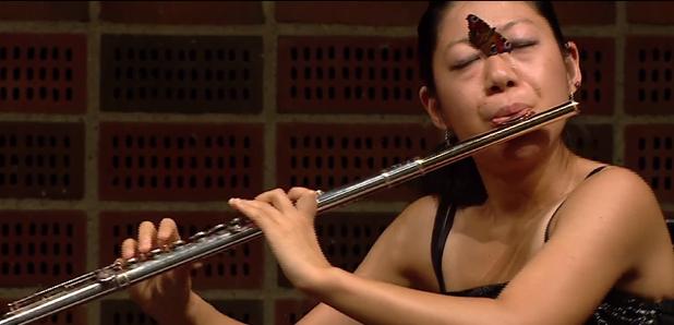 Flute-loving butterfly
