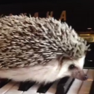 Marutaro the hedgehog