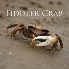 fiddler crab megamod