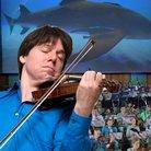 Joshua Bell shark