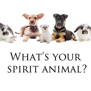 What's your spirit animal
