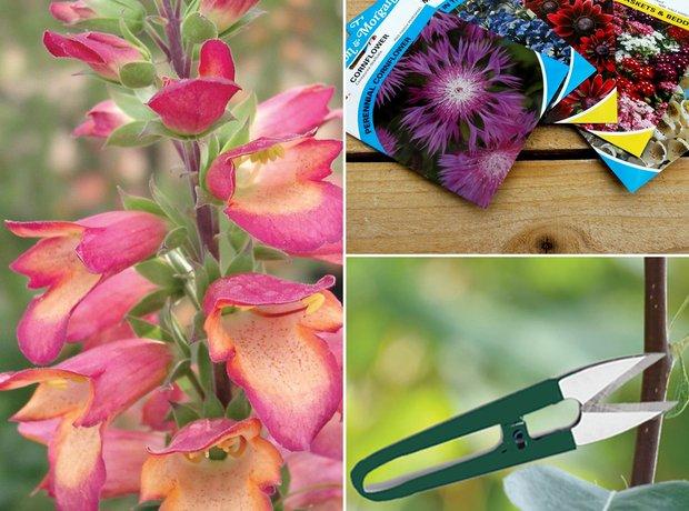 CFM Gardening Foxglove + Chelsea DVD + flower seed