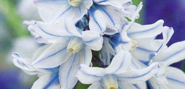 CFM Gardening spring flowering bulbs