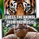 animal music quiz