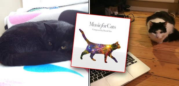 music for cats test